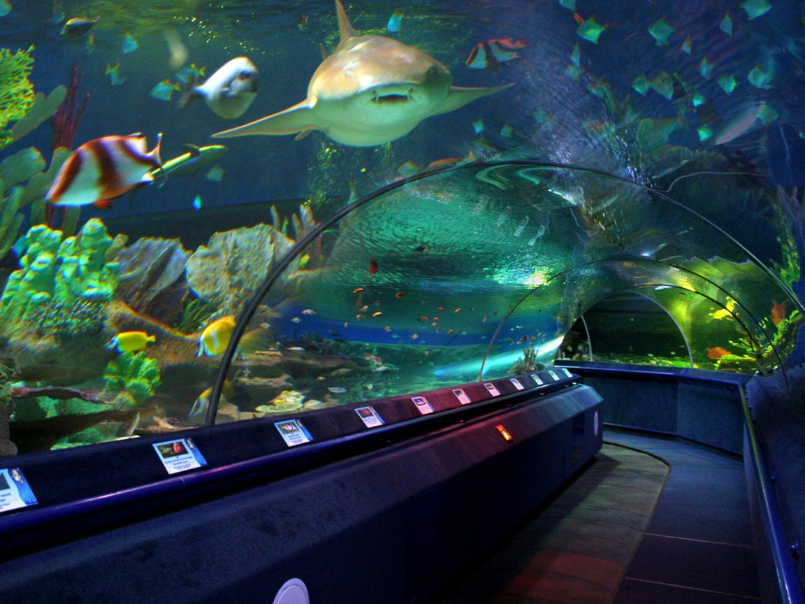 Торгово - развлекательный комплекс нептун; океанариум ( 5 000 квм ) - 2014 год